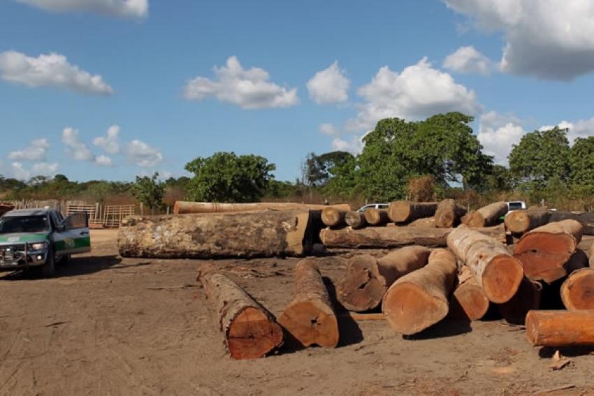 Ministério pode confiscar licenças de exploração em posse de madeireiros