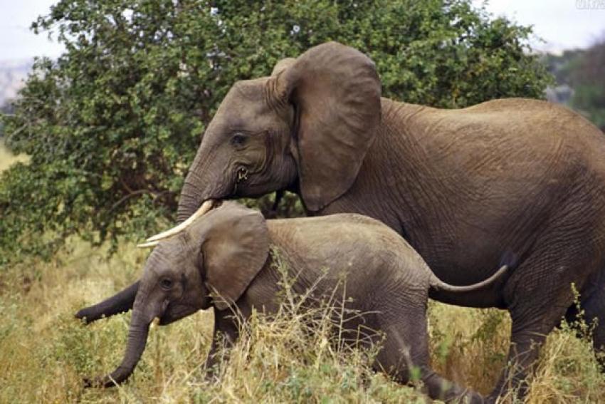 Elefantes destroem plantações nos arredores de Luanda
